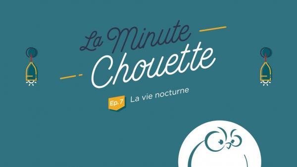 Ep 7 : La vie nocturne - La Minute Chouette - Chouette Hotel